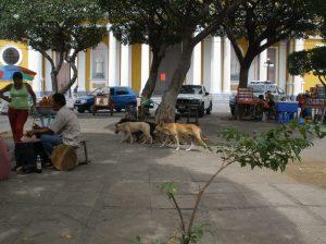 granada dogs